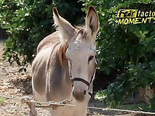 Semen de Burro, Gokkun, tragando leche, Fear Factor Donkey Juice